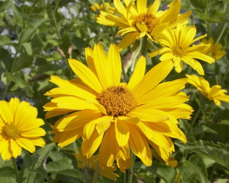 Giglio Correlare Politica Zolte Kwiaty Zdjecia Sciarpa Appostarsi Fantasma